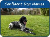 Confident Dog Names