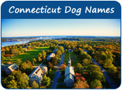 Connecticut Dog Names