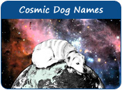 Cosmic Dog Names