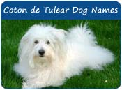 Coton de Tulear Dog Names