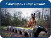 Courageous Dog Names