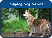 Coydog Dog Names