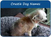 Crustie Dog Names, Names For Chinese Crested and Yorkshire