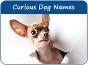 Curious Dog Names