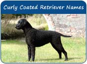 Curly Coated Retriever Dog Names