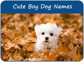 Cute Boy Dog Names