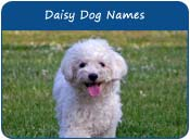 Daisy Dog Names
