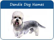 Dandie Dinmont Terrier Dog Names