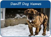 Daniff Dog Names