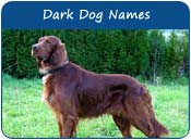 Dark Dog Names