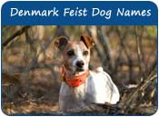 Denmark Feist Dog Names