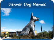 Denver Dog Names