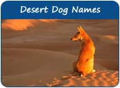 Desert Dog Names