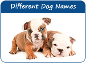 Different Dog Names