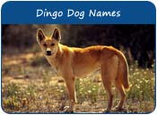Dingo Dog Names