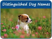 Distinguished Dog Names