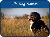 Dog Names Mean Life