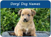 Dorgi Dog Names