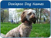 Doxiepoo Dog Names