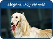 Elegant Dog Names
