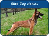 Elite Dog Names