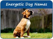 Energetic Dog Names
