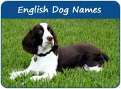 English Dog Names