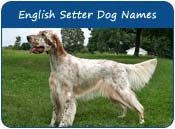 English Setter Dog Names