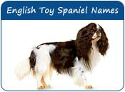 English Toy Spaniel Dog Names