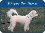 Eskapoo Dog Names