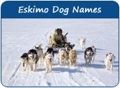 Eskimo Dog Names
