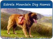Estrela Mountain Dog Names