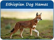 Ethiopian Dog Names