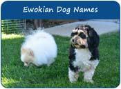 Ewokian Dog Names