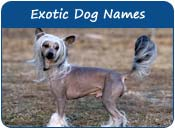 Exotic Dog Names