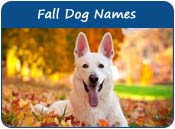 Fall Dog Names