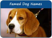 Famed Dog Names