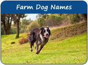 Farm Dog Names