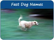 Fast Dog Names