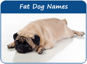 Fat Dog Names