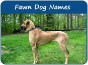 Fawn Dog Names