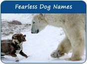 Fearless Dog Names
