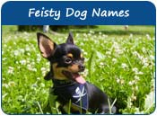 Feisty Dog Names