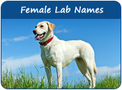 Female Lab Names