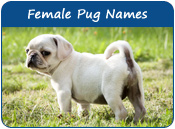 Female Pug Names