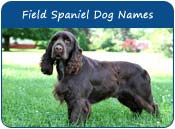 Field Spaniel Dog Names