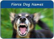 Fierce Dog Names