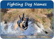 Fighting Dog Names