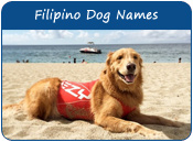 Filipino Dog Names