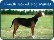 Finnish Hound Dog Names